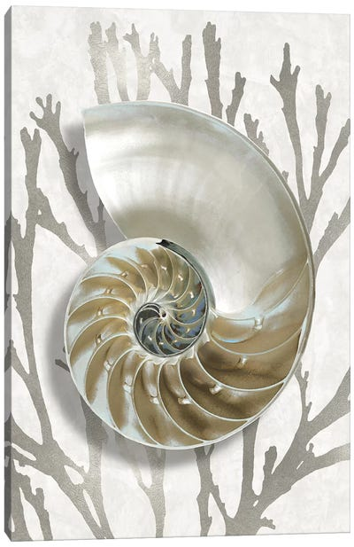 Shell Coral Silver II Canvas Art Print