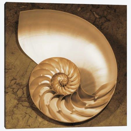 Chambered Nautilus Canvas Print #KEL7} by Caroline Kelly Canvas Wall Art