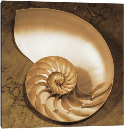 Chambered Nautilus Canvas Art Print