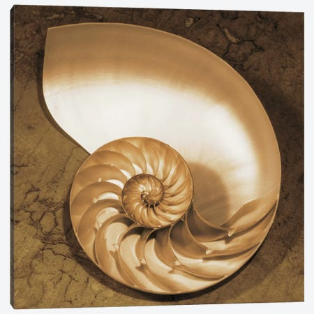 Chambered Nautilus Canvas Print #KEL7} by Caroline Kelly Canvas Wall Art