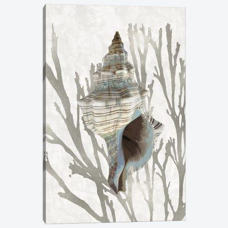 Shell Coral Silver III Canvas Print #KEL80} by Caroline Kelly Canvas Wall Art
