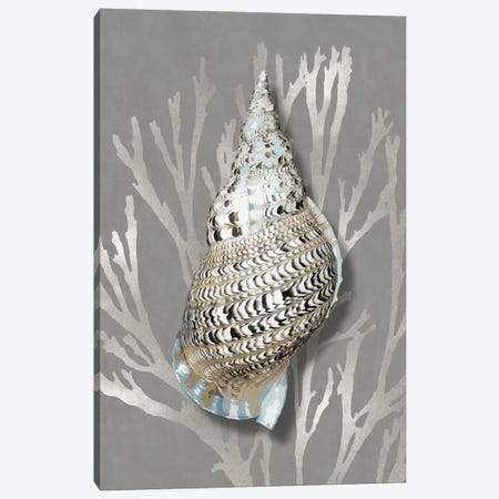 Shell Coral Silver on Gray I Canvas Print #KEL86} by Caroline Kelly Canvas Print