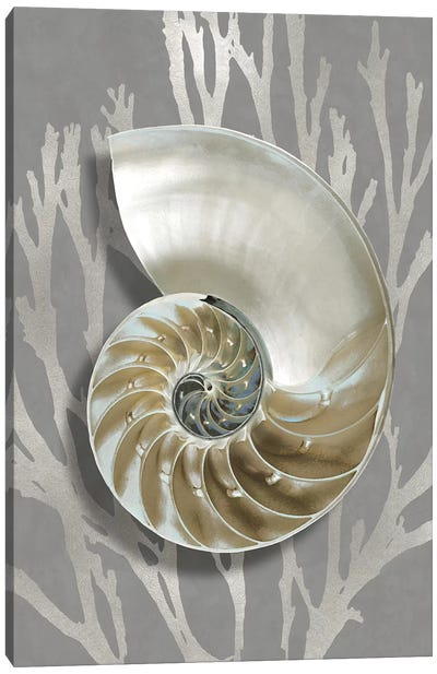 Shell Coral Silver on Gray II Canvas Art Print