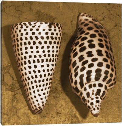 Cone Seashell Canvas Art Print