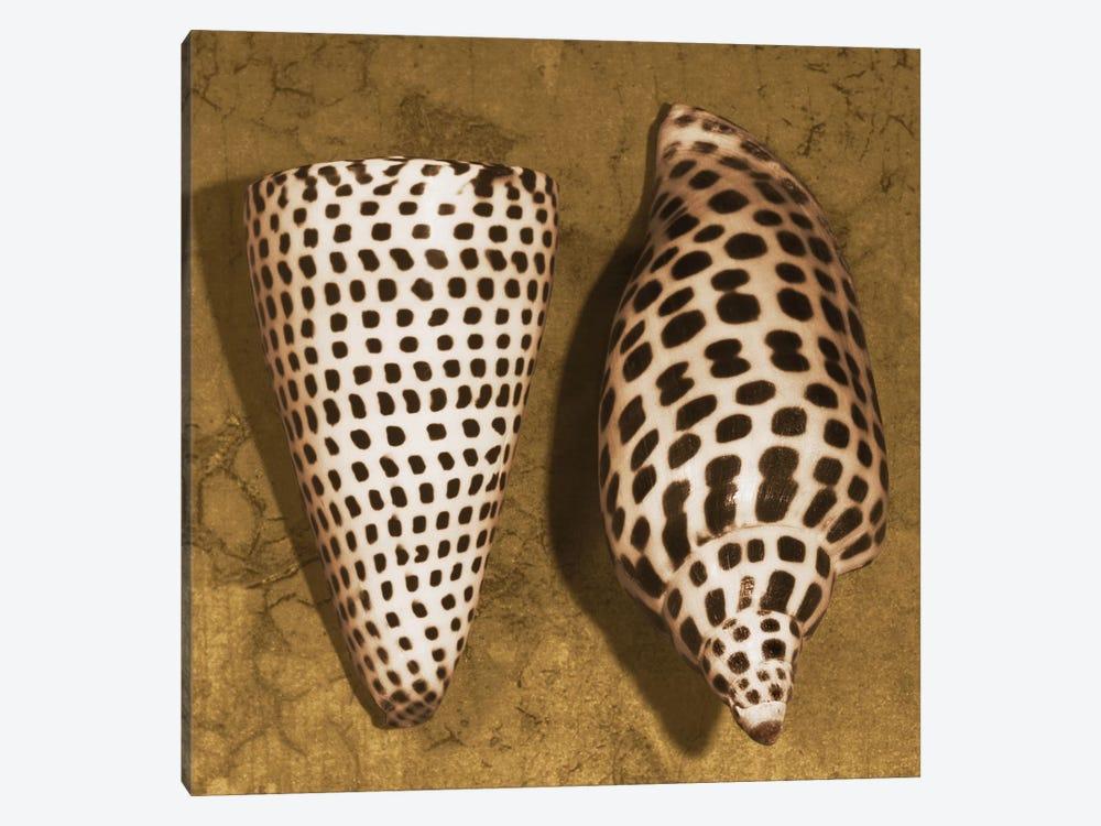 Cone Seashell by Caroline Kelly 1-piece Canvas Artwork