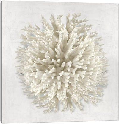 Coral I Canvas Art Print