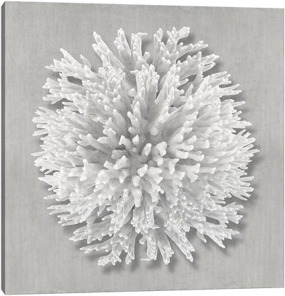 Coral on Gray I Canvas Art Print