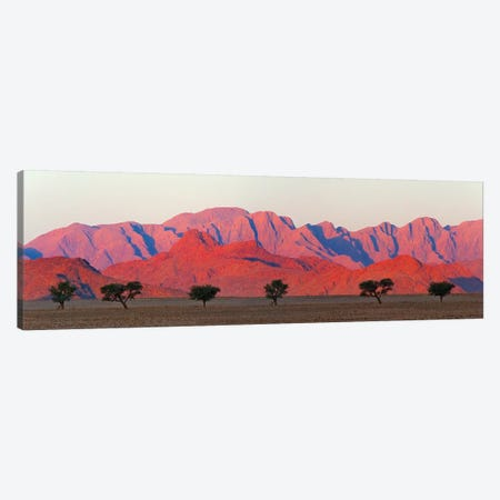 Tree with mountain in southern Namib Desert, Sesriem Canvas Print #KES104} by Keren Su Canvas Print
