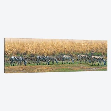 Zebras, Chobe National Park, North-West District, Botswana 3-Piece Canvas #KES110} by Keren Su Canvas Art Print