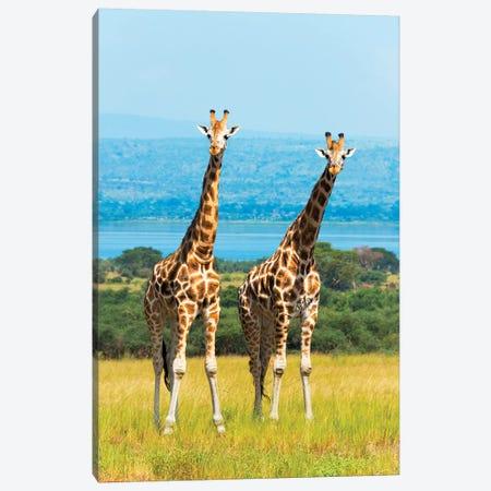 Giraffes on the savanna, Murchison Falls National park, Uganda Canvas Print #KES3} by Keren Su Canvas Art Print