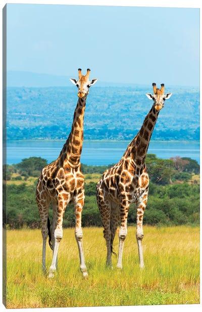 Giraffes on the savanna, Murchison Falls National park, Uganda Canvas Art Print