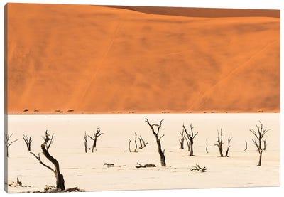 Dead acacia trees in Deadvlei, Sossusvlei, Namib-Naukluft National Park, southern Narim Desert Canvas Art Print