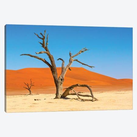 Dead acacia trees in Deadvlei, Sossusvlei, Namib-Naukluft National Park, southern Narim Desert Canvas Print #KES64} by Keren Su Canvas Art
