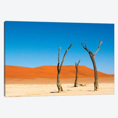 Dead Acacia trees in Deadvlei, Sossusvlei, Namib-Naukluft NP, southern Narim Desert, Namibia Canvas Print #KES67} by Keren Su Canvas Art