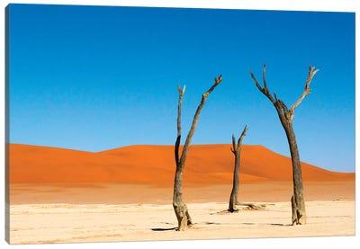 Dead Acacia trees in Deadvlei, Sossusvlei, Namib-Naukluft NP, southern Narim Desert, Namibia Canvas Art Print