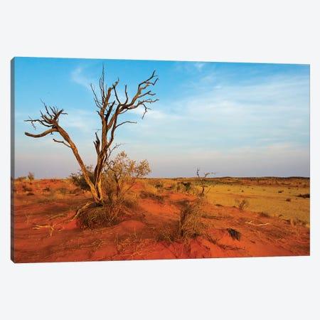 Dead tree on red sand desert, Kgalagadi Transfrontier Park, South Africa Canvas Print #KES68} by Keren Su Art Print