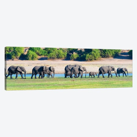 Elephant herd, Chobe National Park, North-West District, Botswana Canvas Print #KES69} by Keren Su Art Print