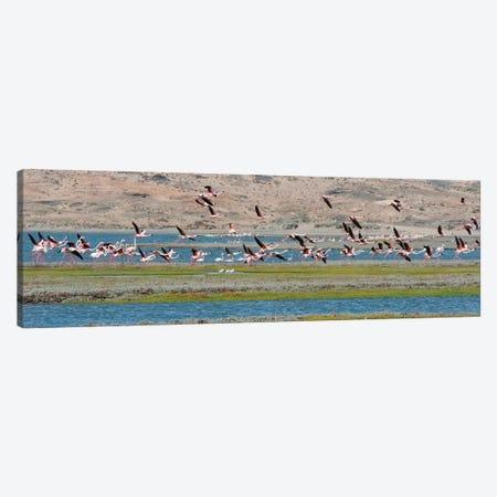 Flamingos, Luderitz Bay, Karas Region, Namibia Canvas Print #KES70} by Keren Su Canvas Art
