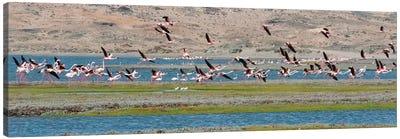 Flamingos, Luderitz Bay, Karas Region, Namibia Canvas Art Print