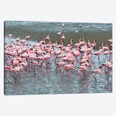 Flamingos, Walvis Bay, Erongo Region, Namibia Canvas Print #KES71} by Keren Su Canvas Wall Art