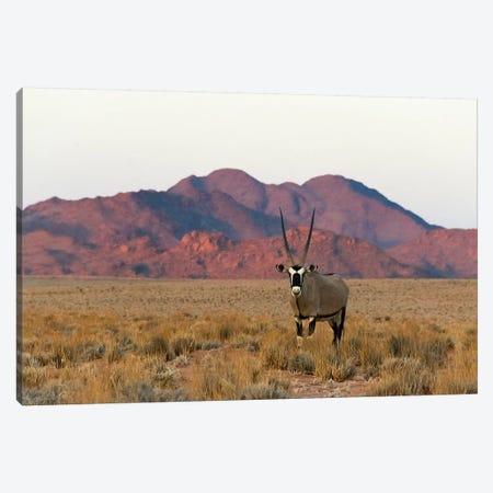 Gemsbok (Oryx Gazella) in southern Namib Desert, Sesriem Canvas Print #KES73} by Keren Su Canvas Artwork