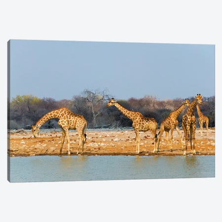 Giraffes by the river. Etosha National Park, Oshikoto Region, Namibia Canvas Print #KES74} by Keren Su Canvas Art Print
