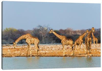 Giraffes by the river. Etosha National Park, Oshikoto Region, Namibia Canvas Art Print
