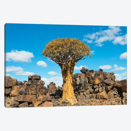 Quiver trees and rock piles in Kalahari Desert, Karas Region, Namibia Canvas Print #KES85} by Keren Su Canvas Wall Art