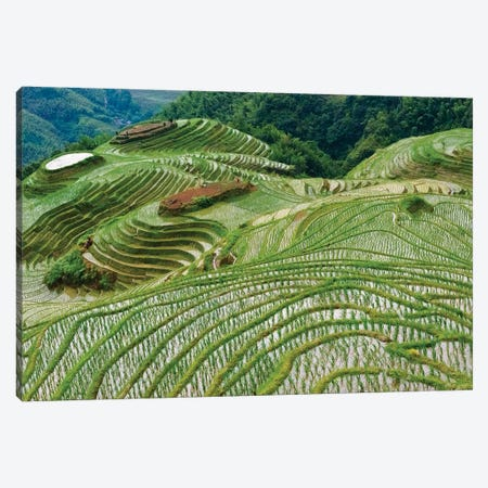 Terraces with newly planted rice seedlings in the mountain, Longsheng, Guangxi Province, China Canvas Print #KES96} by Keren Su Canvas Print