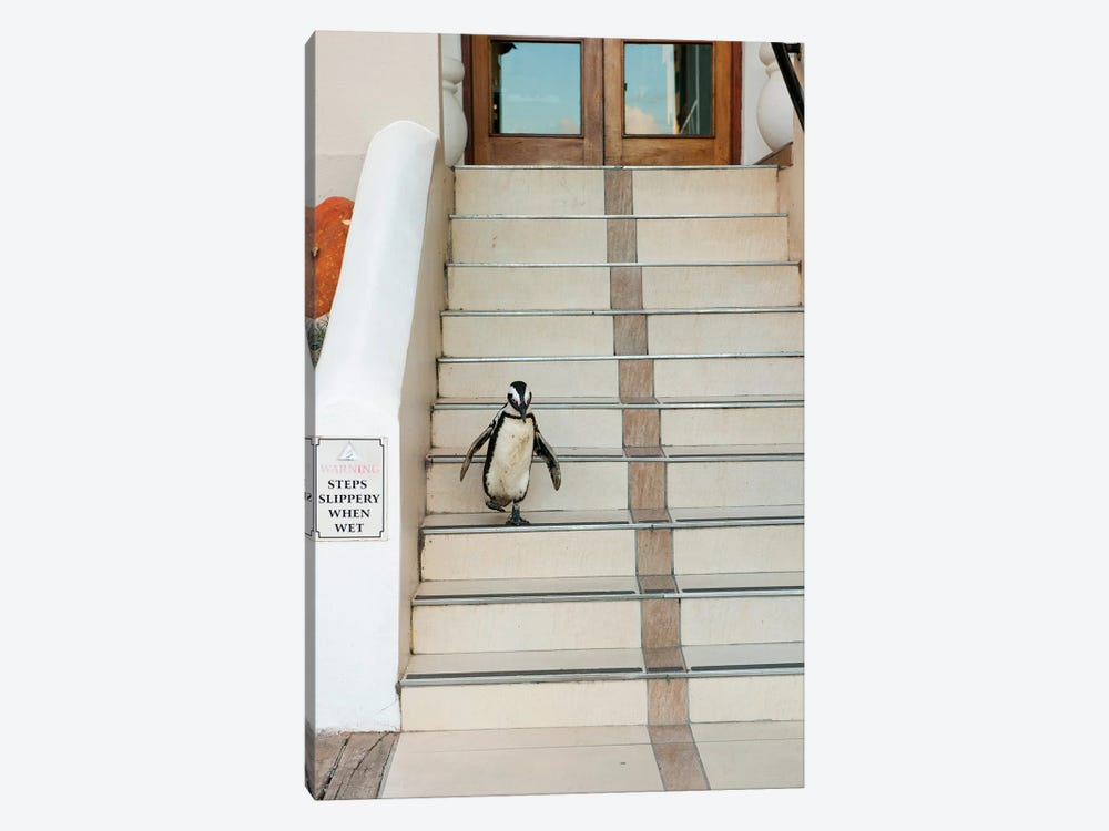 Black-Footed Penguin Descending Stairs, Boulders Beach, Cape Peninsula, South Africa by Kevin Schafer 1-piece Canvas Artwork
