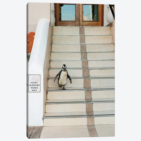 Black-Footed Penguin Descending Stairs, Boulders Beach, Cape Peninsula, South Africa Canvas Print #KEV2} by Kevin Schafer Canvas Art
