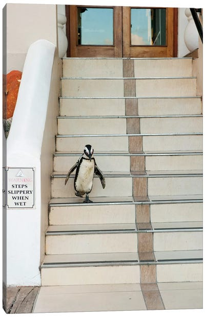 Black-Footed Penguin Descending Stairs, Boulders Beach, Cape Peninsula, South Africa Canvas Art Print