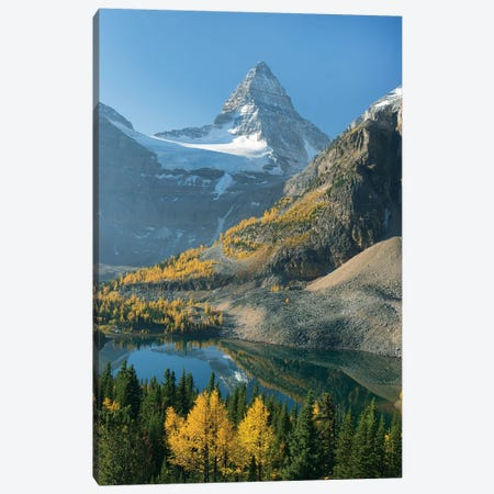 Larch Trees In Autumn Below Mount Assiniboine With Sunburst Lake, Mount Assiniboine Provincial Park, British Columbia, Canada Canvas Print #KEV4} by Kevin Schafer Art Print