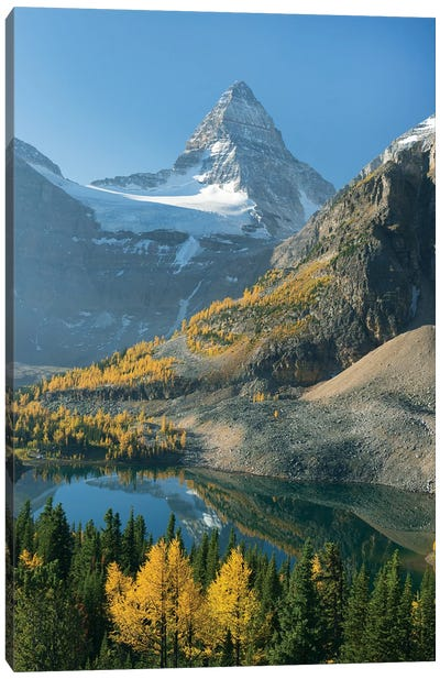 Larch Trees In Autumn Below Mount Assiniboine With Sunburst Lake, Mount Assiniboine Provincial Park, British Columbia, Canada Canvas Art Print