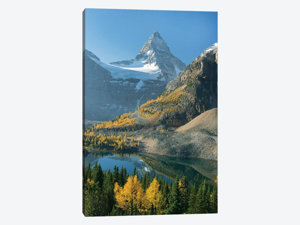 Larch Trees In Autumn Below Mount Assiniboine With Sunburst Lake, Mount Assiniboine Provincial Park, British Columbia, Canada by Kevin Schafer 1-piece Canvas Art