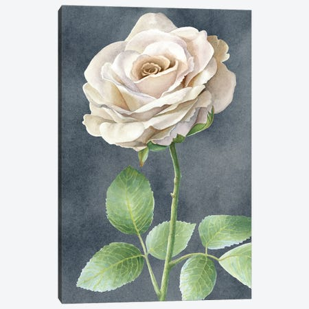 Ivory Roses on gray panel I Canvas Print #KEW15} by Kelsey Wilson Canvas Art Print