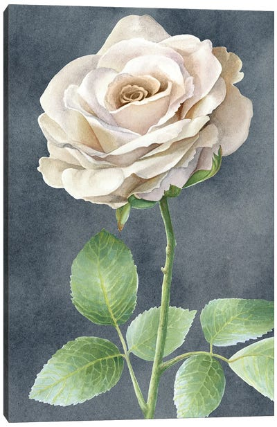 Ivory Roses on gray panel I Canvas Art Print
