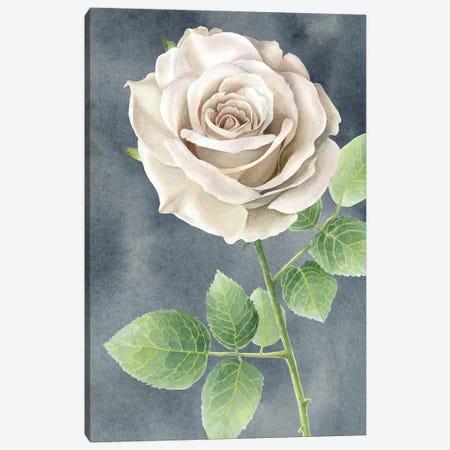 Ivory Roses on gray panel II Canvas Print #KEW16} by Kelsey Wilson Canvas Art Print