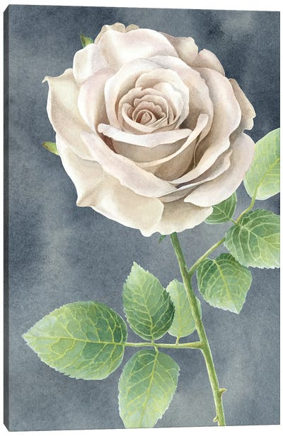 Ivory Roses on gray panel II Canvas Art Print