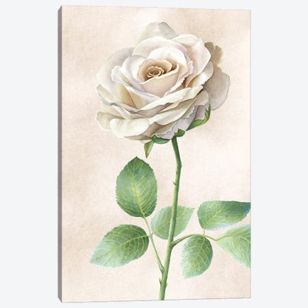 Ivory Roses panel I Canvas Print #KEW17} by Kelsey Wilson Art Print
