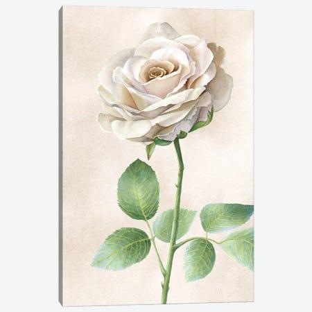 Ivory Roses panel I Canvas Print #KEW17} by Kelsey Wilson Art Print