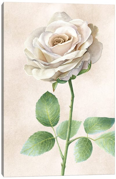 Ivory Roses panel I Canvas Art Print