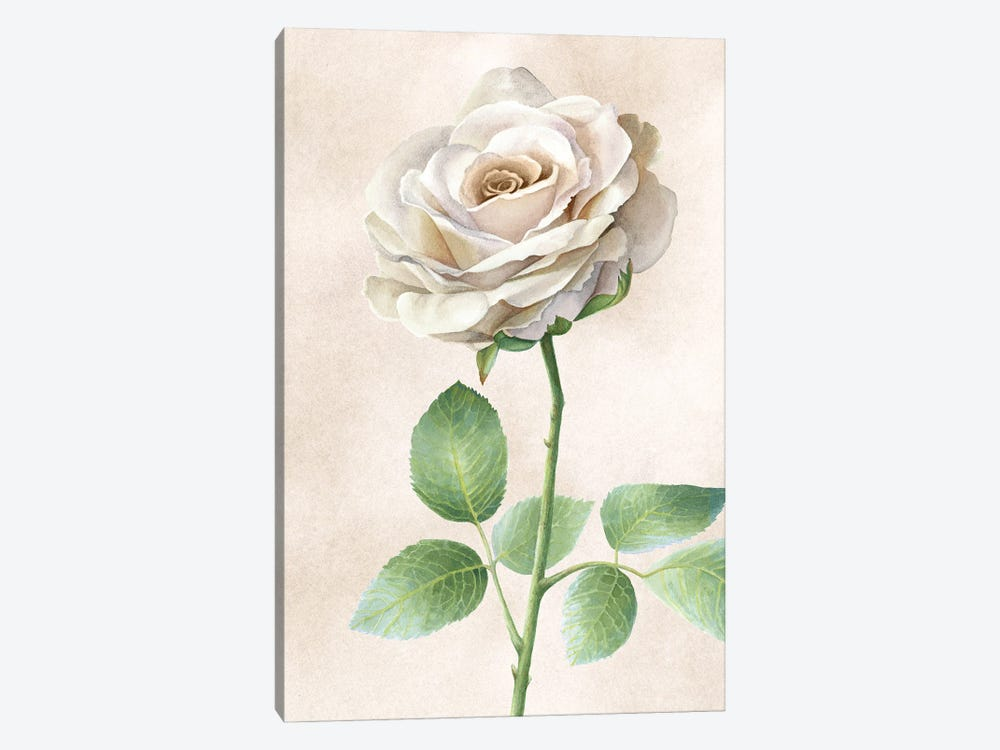 Ivory Roses panel I by Kelsey Wilson 1-piece Canvas Artwork