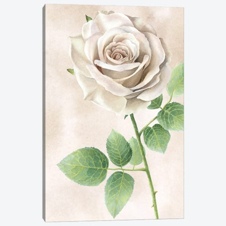 Ivory Roses panel II Canvas Print #KEW18} by Kelsey Wilson Canvas Art
