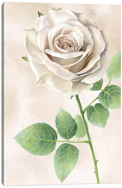 Ivory Roses panel II Canvas Art Print