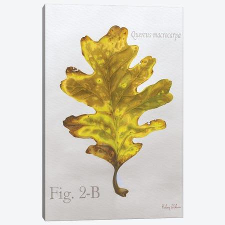 Autumn Leaves On Gray III-Oak Canvas Print #KEW24} by Kelsey Wilson Canvas Wall Art