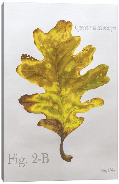 Autumn Leaves On Gray III-Oak Canvas Art Print