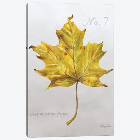 Autumn Leaves On Gray II-Maple 2 Canvas Print #KEW25} by Kelsey Wilson Canvas Art