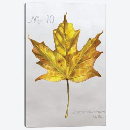 Autumn Leaves On Gray I-Maple Canvas Print #KEW26} by Kelsey Wilson Canvas Art