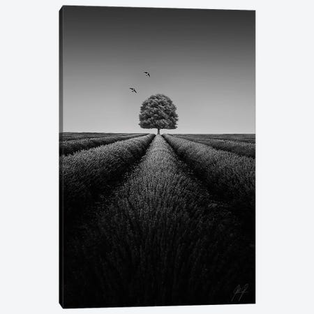 Compelling III Canvas Print #KFD11} by Kathrin Federer Canvas Print